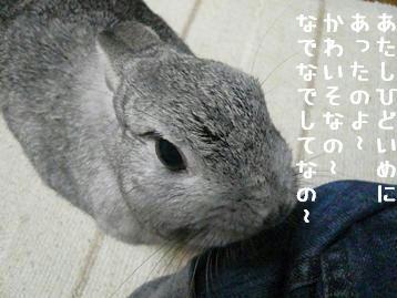 20091205_03.jpg