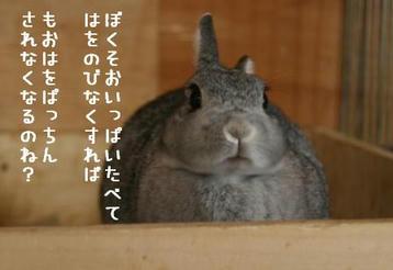 20091208_02.jpg