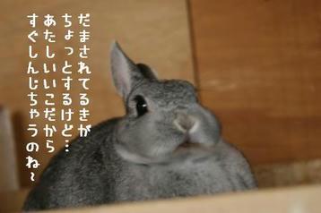 20091208_03.jpg