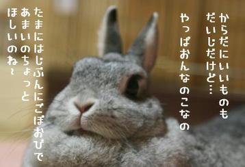 20091208_04.jpg