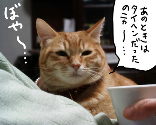 PIC00008.jpg