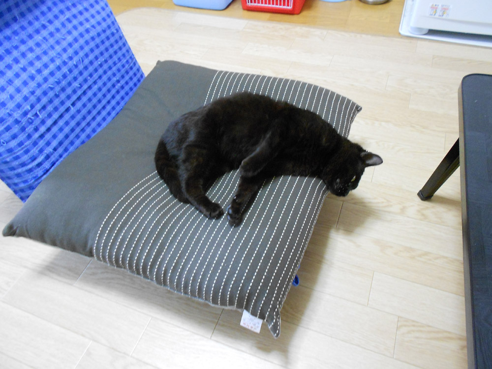 白血病 治る: 猫らのあしあと 保護猫病院へ行く