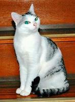 母ネコのポミ