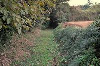東側の溝を北側から撮影