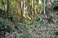 「竪堀」状の地形。画像クリックで拡大します。