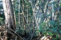 自然のものか遺構かの判断に迷う堀切状の地形