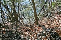 南東部の「堀切」「竪堀」状地形