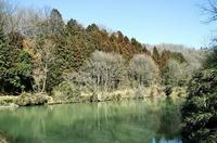南東側の沼地