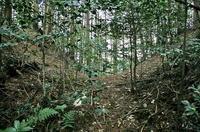 小瀬戸城の堀切
