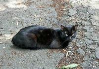 眼光鋭い黒猫さん