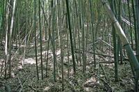伝大串館の堀跡
