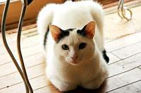 ネコの「いちご」