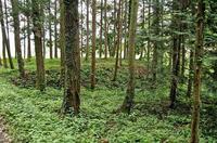 遠道遺跡付近の山林