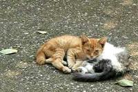 子ネコの兄弟