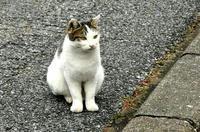 寿能城のネコさん その2