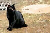 ご近所の黒猫さん