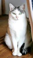 母ネコの「ポミ」