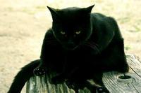 公園の黒ネコさん