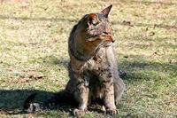 茶臼山の人懐こいネコさん
