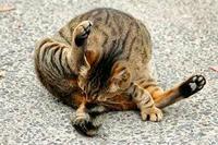 大坂城の子ネコ