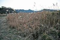 東平井砦の堀跡