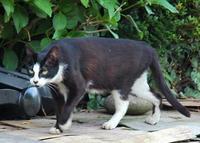 伊奈城の黒猫 「なにみてるのかにゃー」