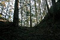 寺山砦の堀切
