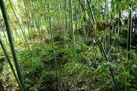 下栗須堀之内の土塁状地形