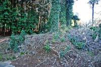板橋城の外郭土塁