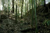 鎌刈館の不思議な土塁と空堀
