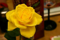 黄色いバラの花
