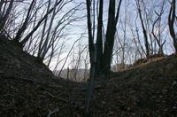 要害山主郭北側の堀切