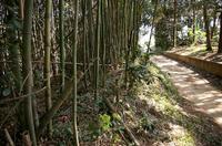 島田城付近の土塁状地形
