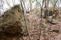 浅香入城南側の斜面