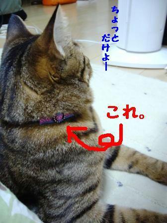 a97c5ae7.jpg