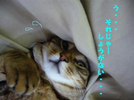 fc14ed1b.jpg