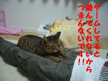92aa4a61.jpg