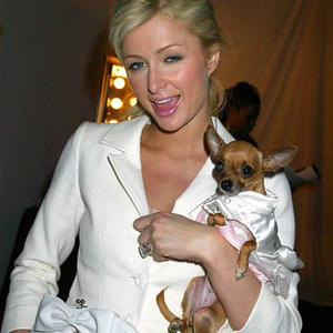 paris_hilton_tinkerbell_dog.jpg