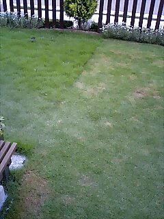 我が家の芝生