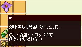 meisouki_533_Flower.PNG