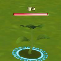 meisouki_545_Plant-01.JPG