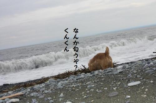 IMG_0560.JPG