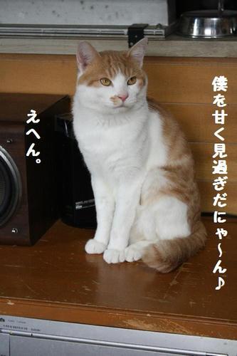 IMG_7597.JPG