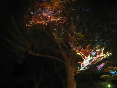 シャボン玉の木