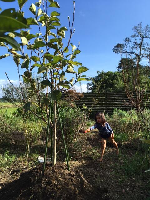 やる気の庭仕事
