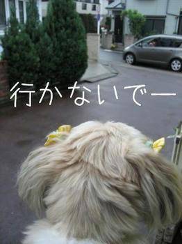 IMG_0998_1.JPG