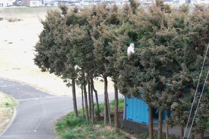 AM8:40 木の上からこちらを見ているネコちゃん。