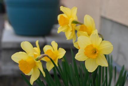 すごいスピードで大きくなるものですね。春だなあ。