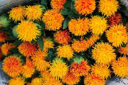 綺麗なオレンジ色。この染料が高値で売れたというのは納得がいく。