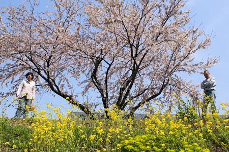 桜の季節は、菜の花の季節でもあるのですな。ちなみに写真の男性は僕ではありません。